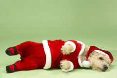 Dog In Santa Costume Stock Photography
