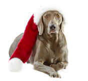 Dog in Santa hat Royalty Free Stock Photography
