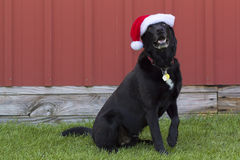 Dog in santa hat Royalty Free Stock Image