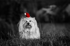 Dog with Santa Hat - Color Key Stock Images