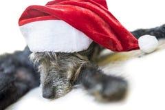 Dog with Santa hat Stock Photos