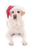 Dog in santa hat isolated on white Royalty Free Stock Photo