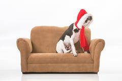Dog and Santa Hat Royalty Free Stock Photo