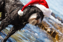 Dog with Santa hat. Tibetan terrier with Santa hat  on the beach Stock Image
