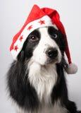 A dog in Santa's cap Royalty Free Stock Photo