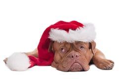 Dog with Santa's hat Stock Photo