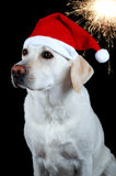Dog with Santa's hat Stock Images