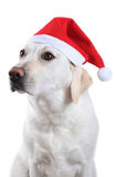 Dog with Santa's hat Royalty Free Stock Image