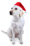 Dog with Santa's hat Royalty Free Stock Photo