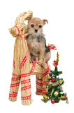 Dog on Santa's straw reindeer Royalty Free Stock Photography