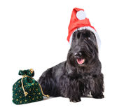 Dog Santa Royalty Free Stock Photo