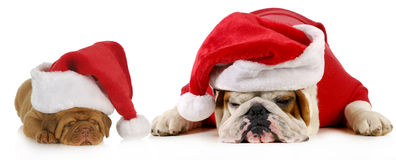 Dog santa Stock Photography
