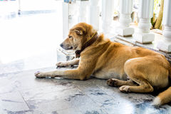 Dog sat down Stock Image