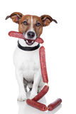 Dog with sausages Stock Images