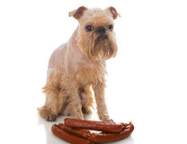 Dog and sausages Royalty Free Stock Image