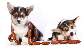 Dog with sausages Royalty Free Stock Photography