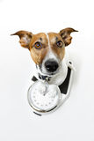 Dog scale Stock Photography