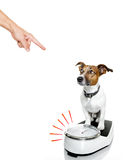 Dog on scale , with overweight Royalty Free Stock Photos
