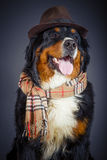Dog in scarf and hat Royalty Free Stock Photos