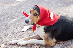 Dog in scarf l Stock Photos