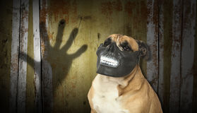 Dog in a scary teeth mask with digital backdrop Royalty Free Stock Image
