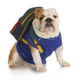 Dog school royalty free stock image