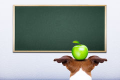 Dog at school Royalty Free Stock Image
