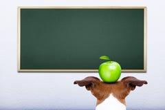Dog at school Royalty Free Stock Image