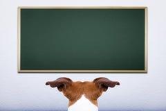 Dog at school Stock Photos
