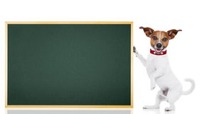 Dog school student Royalty Free Stock Images
