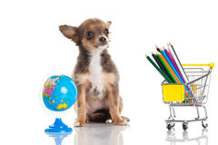 Dog school supplies isolated on white background Royalty Free Stock Photography