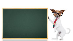 Dog school teacher Stock Images