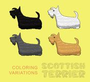 Dog Scottish Terrier Coloring Variations Vector Illustration Royalty Free Stock Image
