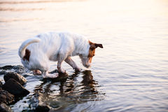 Dog scratching water surface looking for fish in river Stock Photo