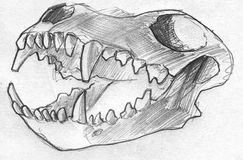 Dog scull pencil sketch Stock Image