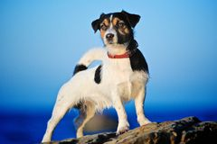 Dog at the sea Royalty Free Stock Photo