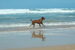 Dog and the sea Stock Images