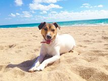 Free Dog, Sea And Beach In Summer Stock Images - 117508264