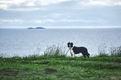 Dog on the sea background Royalty Free Stock Images