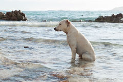 Dog in  sea Royalty Free Stock Photos