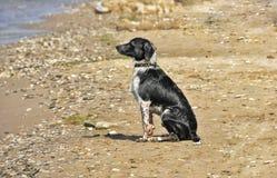 Dog of the sea Stock Photo