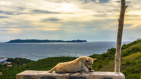 Dog by the sea. Cloudscape ocean animals pet seaside water domesticated beach canidae animal dog canine clouds ball horizon shoreline sea mammal Royalty Free Stock Photography