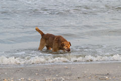 Dog by the sea Royalty Free Stock Photo