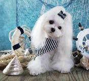 Dog and sea decorations. White Maltese dog dog and sea decorations royalty free stock photo