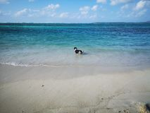 Dog in the sea royalty free stock photo