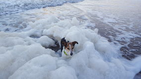 Dog in the sea stock photo