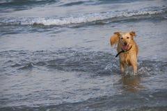Dog in sea Stock Photo