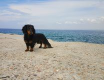 Dog & sea. July vacation unforgettable little dog by the sea Royalty Free Stock Images