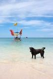Dog in sea. Dog labrador in the sea Stock Photos