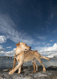 Dog and sea Royalty Free Stock Photography